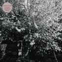 PAPERCUTS : LP Parallel Universe Blues