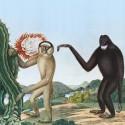 BASTON : LP Primates