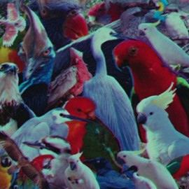STRANGE FORCES : LP I'd Rather Listen To The Bloody Birds