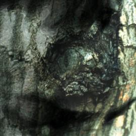 TIERSEN Yann : LP La Valse Des Monstres