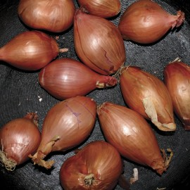"""TY SEGALL : 12""""EP Fried Shallots"""