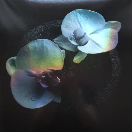 VANNIER Jean-Claude / PATTON Mike : LP Corpse Flower