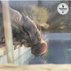 "METRONOMY : 12""EP Mandibules (Main Theme)"